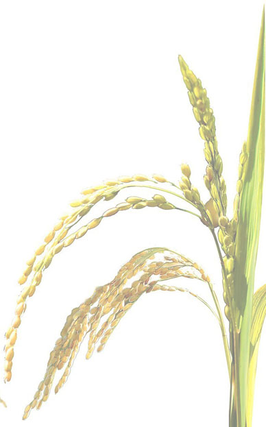 UPCOMING TALK on Thursday, August 30 – Stalking Rice Genomes